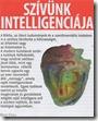szivunk-intelligenciaja_thumb3